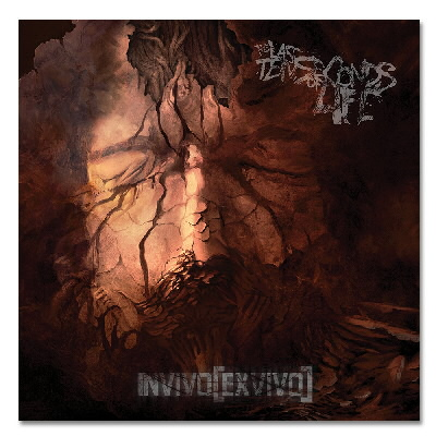 workhorse - Invivo Exvivo CD